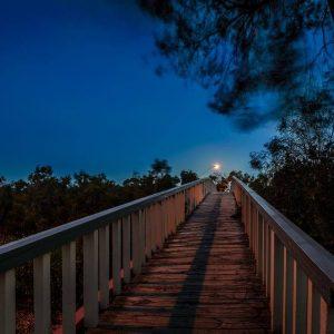 2014_bridge_at_night_jo